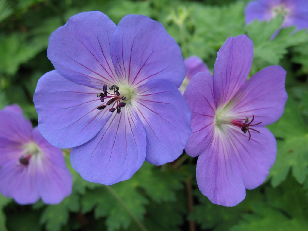 5 perennials that flower for long periods