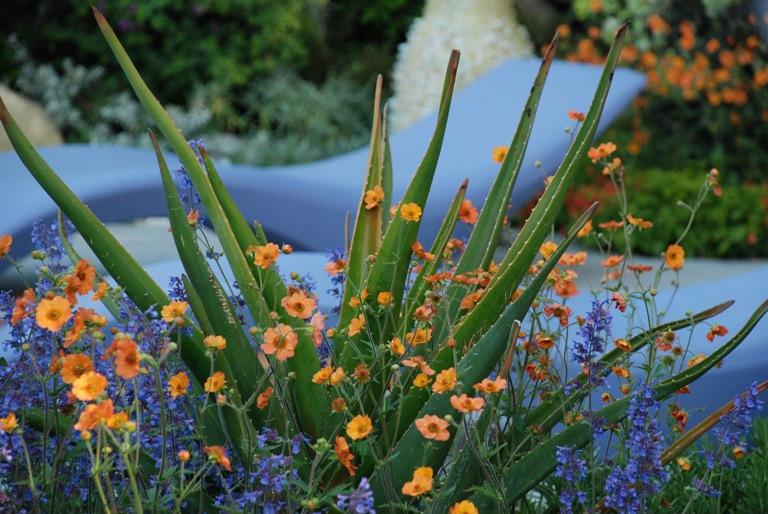 A Monaco Garden Sarah Eberle