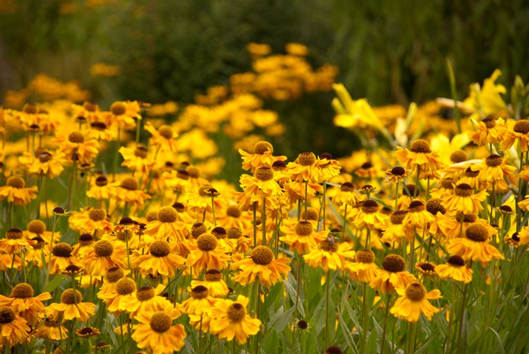 6 Late Flowering Perennials Lisa Cox Garden Designs Blog