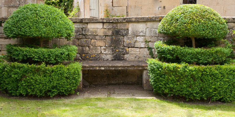 Box topiary and stone bench in Box, Wiltshire