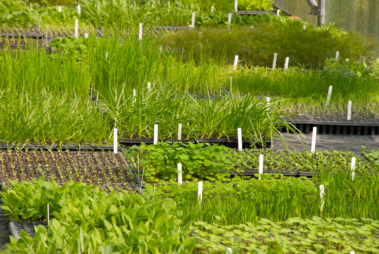 Seed trays & plug plants at Orchard Dene Nursery