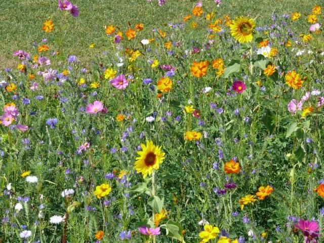 Plants To Attract Bees Lisa Cox Garden Designs Blog