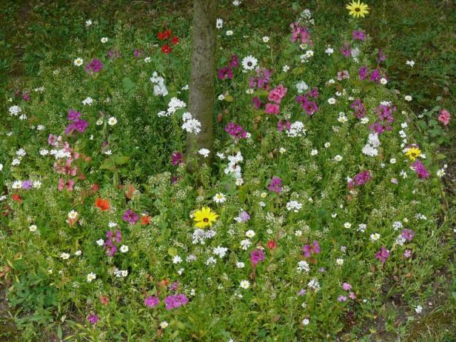 Flowers for under trees Lisa Cox Garden Designs Blog