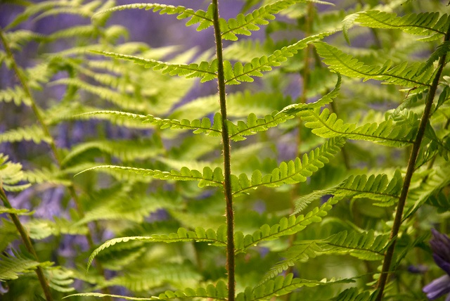 love ferns, especially under trees when they catch the light.
