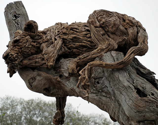James Doran Webb Lion in tree at Chelsea Flower Show 2013