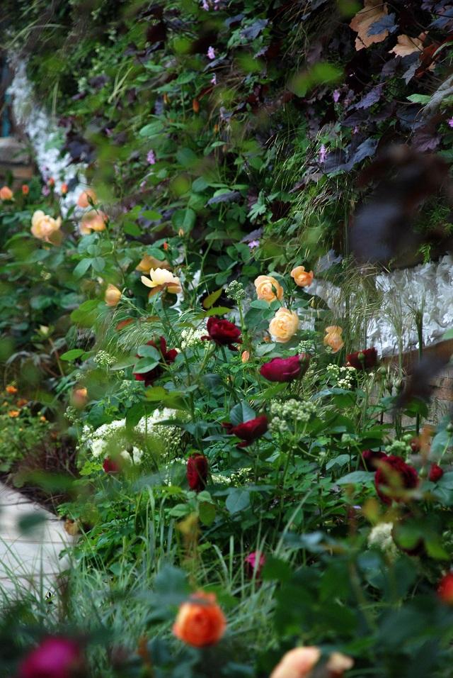 Rose planting on Stoke on Trent garden RHS Chelsea 2013