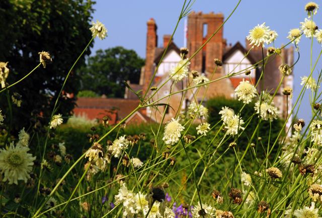Cephalaria gigantea at Loseley Park Lisa Cox Garden Designs