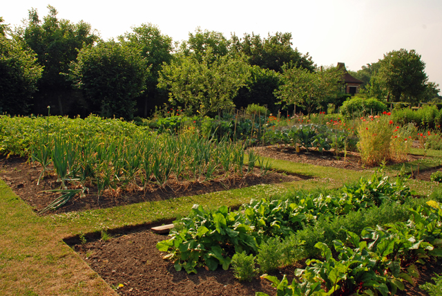A glorious morning at loseley park the rose herb and for Organic vegetable garden design