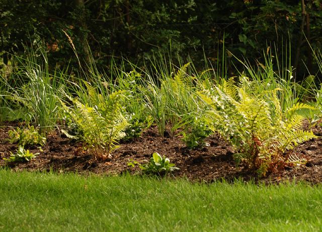Grasses & ferns East Horsley Lisa Cox Garden Designs