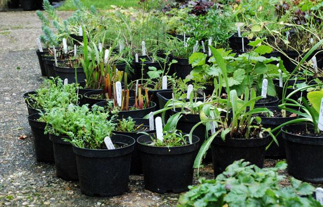 Perennials at Forton Nursery Lisa Cox Garden Designs