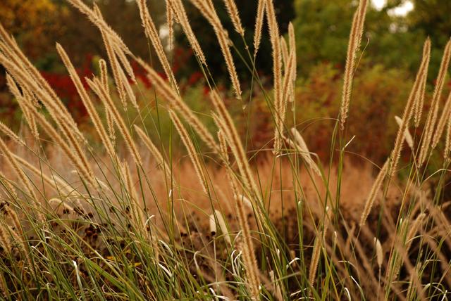 Autumn at RHS Garden Wisley Lisa Cox Designs