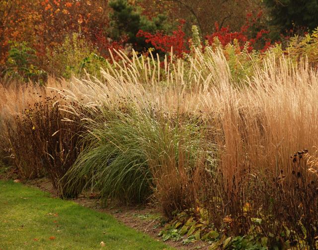 Autumn grasses at RHS Garden Wisley Lisa Cox Designs