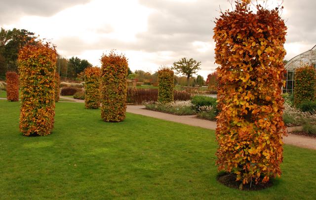 RHS Garden Wisley in Autumn Lisa Cox Designs