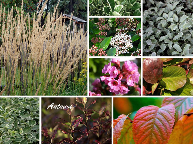 Planting Design Sutton Autumn