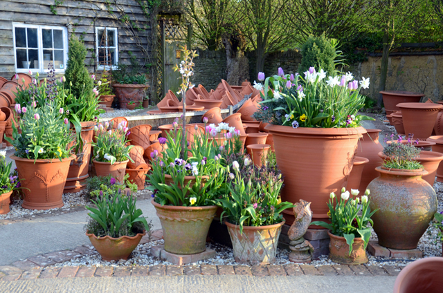 Terracotta pots lisa cox garden designs blog for Garden design ideas with pots