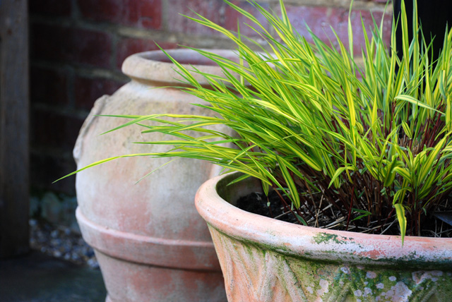 Hakonechloa macra Aureola in pot Lisa Cox Garden Designs