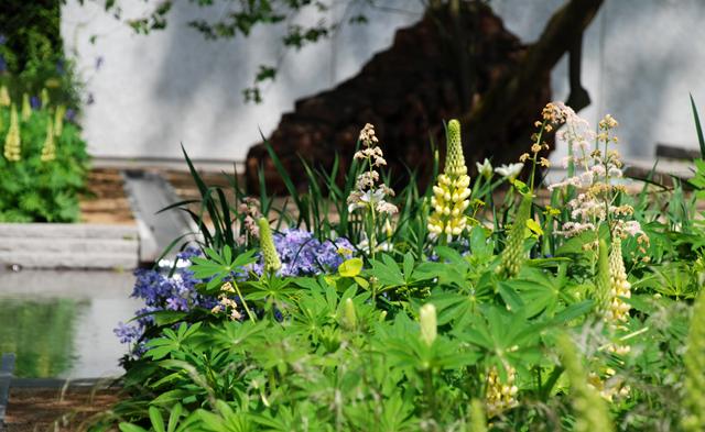 Luciano Giubbilei garden Chelsea 2014 Lisa Cox Designs