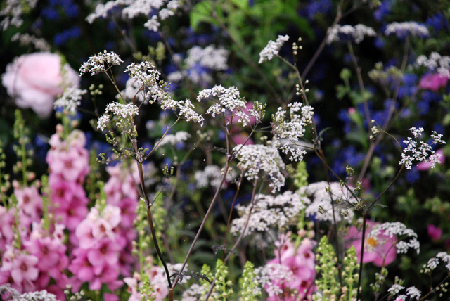 Planting Hilliers stand RHS Chelsea 2014 Lisa Cox