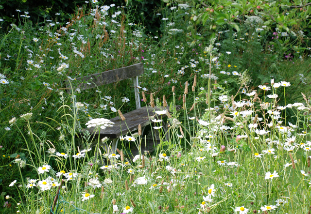 Bench in wildflower meadow Lisa Cox Garden Designs
