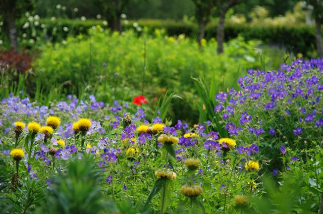 Flower garden at Loseley Park Lisa Cox Designs