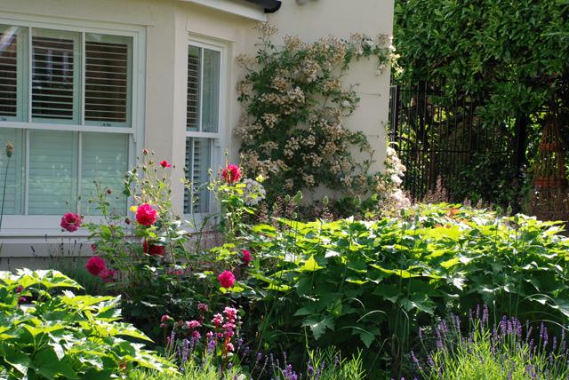 Oxshott front garden planting Lisa Cox Designs