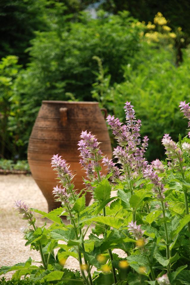Terracotta urn in Herb Garden at Loseley Park Lisa Cox Designs