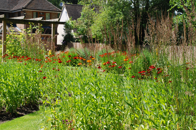 Herbaceous planting in East Horsley one year on Lisa Cox Designs
