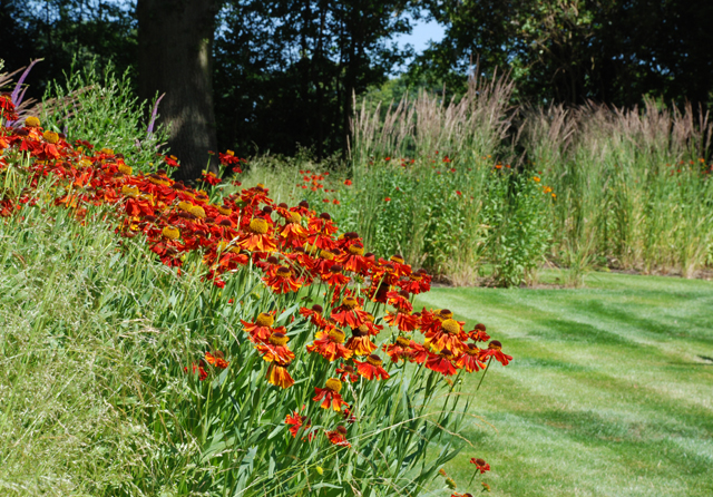 Planting at East Horsley one year on Lisa Cox Garden Designs