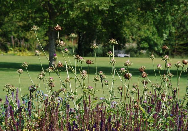 Glyndebourne garden Lisa Cox Garden Designs - Copy