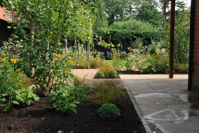 Woking back garden after planting Lisa Cox Designs