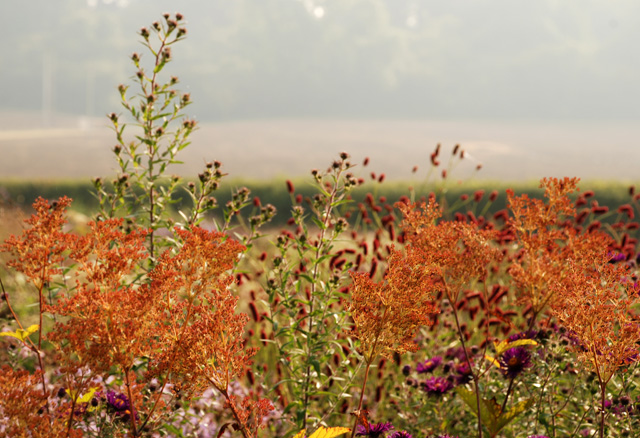 Autumn borders at Hauser Wirth Somerset Lisa Cox Designs