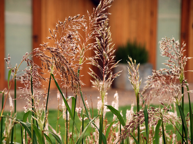 Grasses in entrance courtyard Hauser & Wirth Somerset Lisa Cox Garden Designs