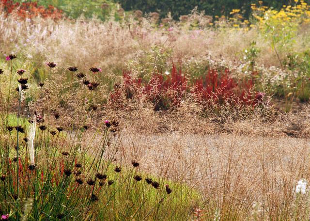 Grasses & perennials Hauser Wirth Somerset Lisa Cox Designs
