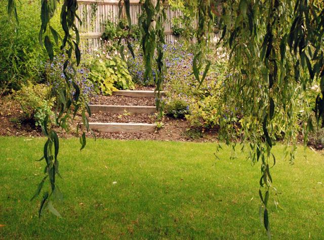 Informal steps and willow tree Lisa Cox Garden Designs