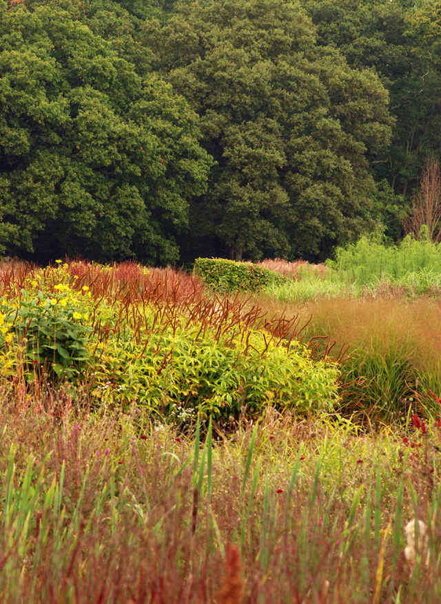 Sussex Prairies in Autumn Lisa Cox Garden Designs
