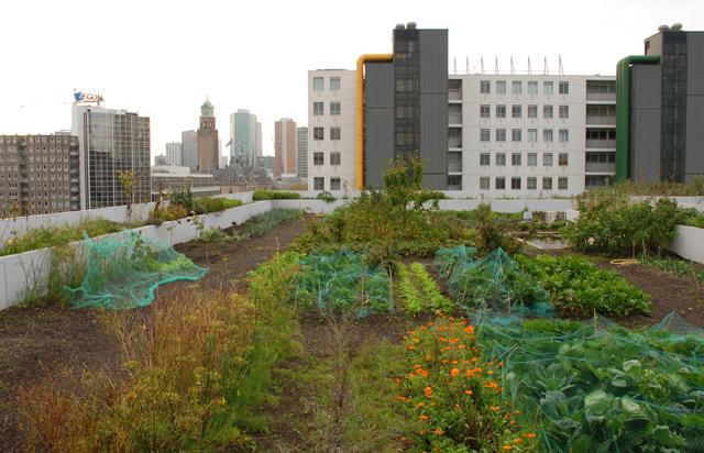 DakAkker Roof Garden Rotterdam Lisa Cox Garden Designs