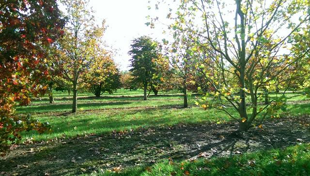 Field grown trees at Van Den Berk Nursery Holland Lisa Cox Garden Designs