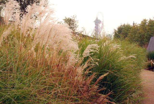 Olympic Park London Lisa Cox Garden Designs