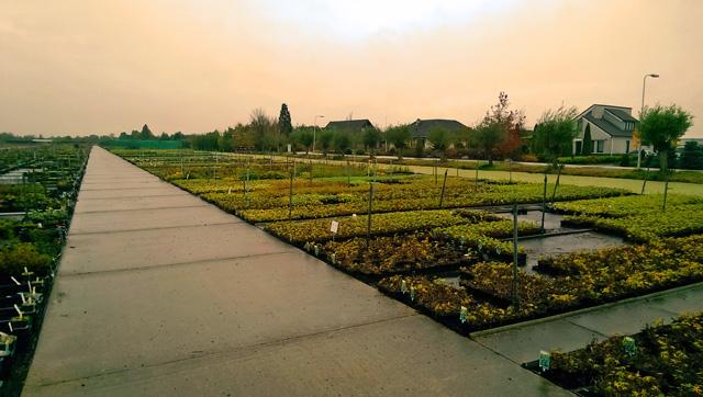 Rijnbeek Nursery Holland Lisa Cox Garden Designs