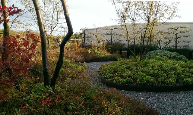 Roof garden at Ebben Nursery Lisa Cox Garden Designs
