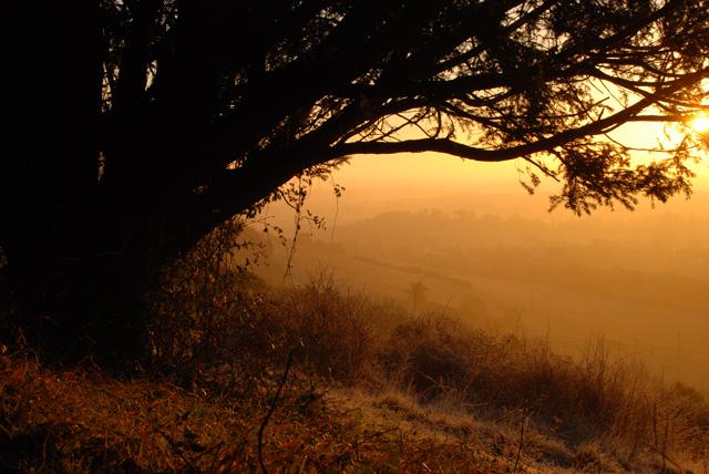 Golden sunrise on Box Hill Lisa Cox Garden Designs