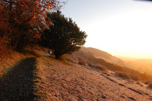 Morning sun on Box Hill Lisa Cox Garden Designs