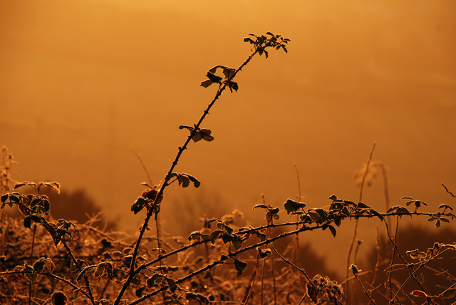 Winter bramble at sunrise Lisa Cox Garden Designs