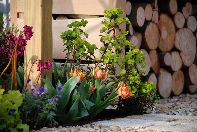 Planting Mazda Garden Lisa Cox Garden Designs RHS Cardiff Flower Show 2015