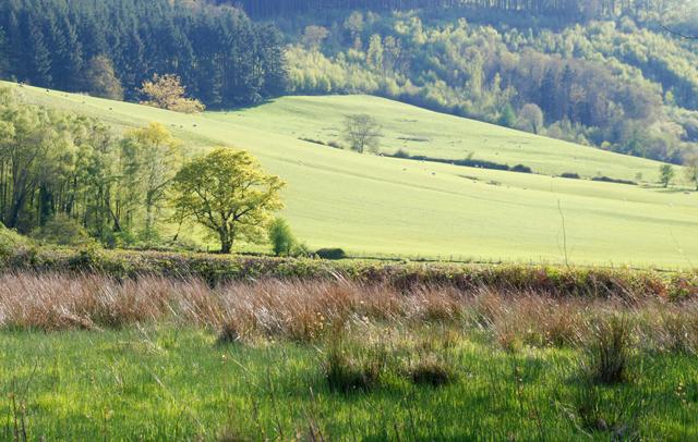 Spring in the Welsh Hills Lisa Cox Garden Designs