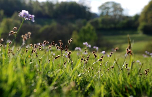Wildflowers in meadow Lisa Cox Garden Designs