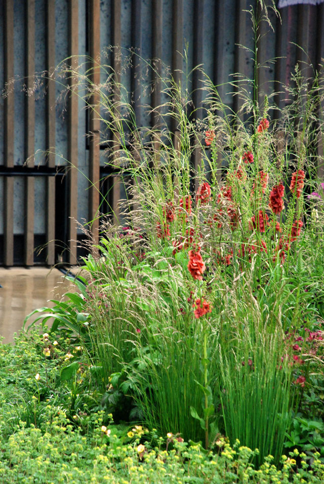 Frothy planting in Cloudy Bay Garden RHS Chelsea 2015 Lisa Cox
