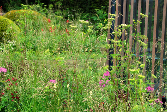 Planting in Cloudy Bay Garden RHS Chelsea 2015 LIsa Cox