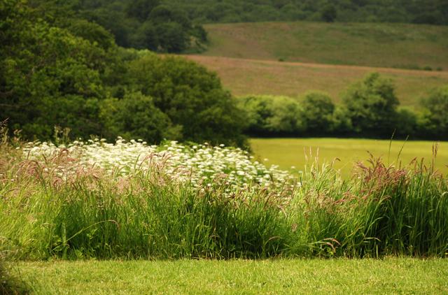 June grasses Lisa Cox