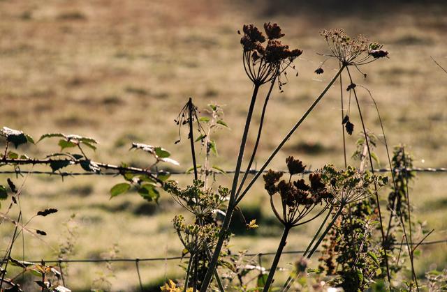 Early dew in Wales Lisa Cox Garden Designs